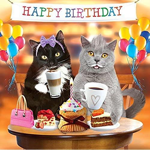 Cat Birthday Card Amazon co uk