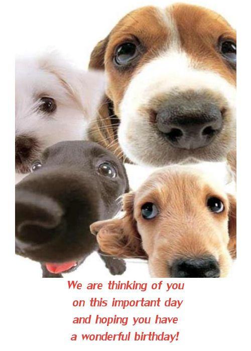 Dog Birthday Cards Facebook Happy Birthday Card With