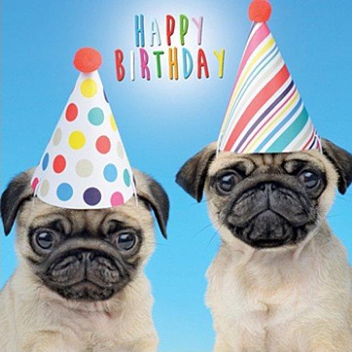 Pug Birthday Card Amazon co uk