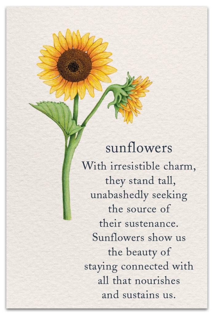Sunflowers Birthday Card Cardthartic